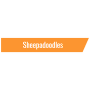 Sheepadoodles in Eckert CO   Open Range Pups